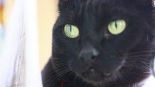 飼い猫にとって家猫と外猫のどっちがいい?メリットとデメリットを考える